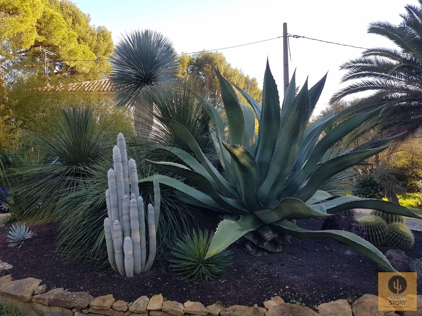 Aménagement d\'un jardin sec rocaille - Vente de cactus et ...